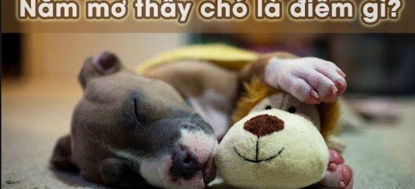 Mơ thấy bị chó cắn là hên hay xui